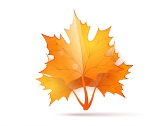 Foglia di autunno lucido su sfondo bianco.