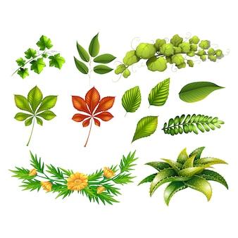 Foglie verdi collezione