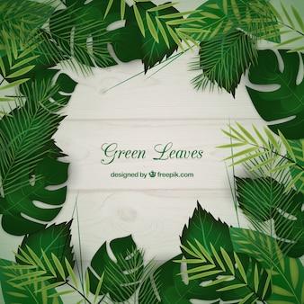 Foglie verdi sfondo