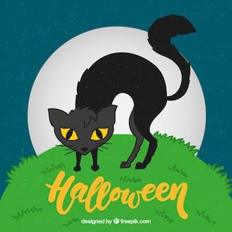 Gatto nero sullo sfondo dell'erba