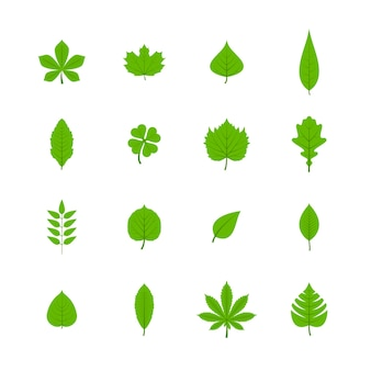 Gli alberi verdi lascia icone piatte di aspen quercia di acero di tiglio ciliegio piante di trifoglio isolato illustrazione vettoriale