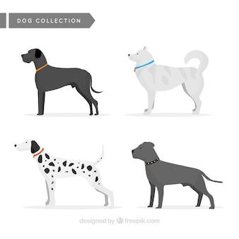 Grande collezione di cani profilo
