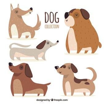 Grande selezione di cani decorativi