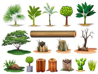 Illustrazione degli alberi e ceppi su uno sfondo bianco