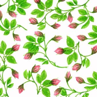 La collezione di rose rose acquerello dipinte a mano