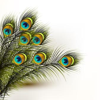 Piume di pavone foto e vettori gratis - Pagina colorazione pavone ...