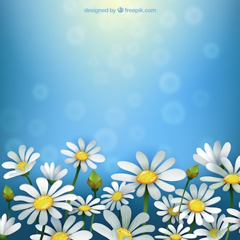 Primavera sfondo con margherite