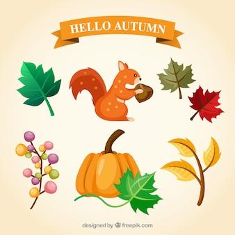 Primo scoiattolo e altri elementi naturali di autunno