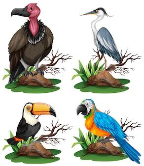 Quattro diversi tipi di illustrazione di uccelli selvatici