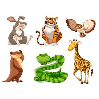 Raccolta animali selvatici
