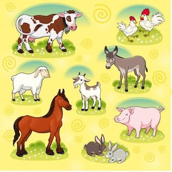 Raccolta degli animali da allevamento