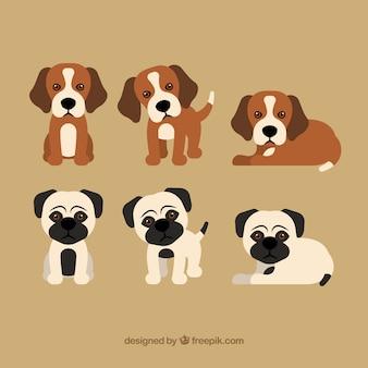 Raccolta dei simpatici cuccioli