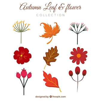 Raccolta di fiori disegnati a mano e foglie
