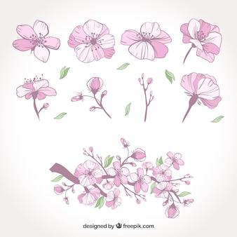 Dipinti a mano fiori primaverili scaricare vettori gratis for Fiori disegnati