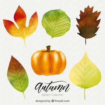 Raccolta di foglie e zucca di acquerello