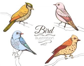Raccolta di illustrazioni di uccelli