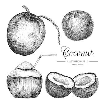 Raccolta di noce di cocco disegnata a mano