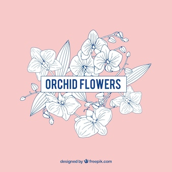 Rosa fiori di orchidea cornice