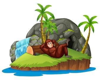 Scimmia sull'isola