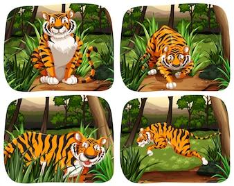 Tigre che vive nell'illustrazione della giungla