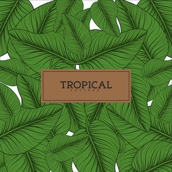 Tropicale lascia sfondo