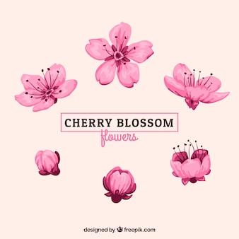 Vari fiori di ciliegio acquerello