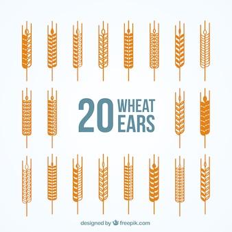 Varietà di spighe di grano