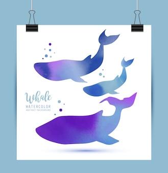 Whale illustrazione acquarello