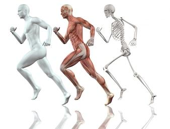3D mannelijke figuur loopt met de huid skelet en spieren kaart