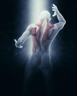 3D render van een mannelijke arts figuur met een gedeeltelijke spier kaart op zijn rug en nek