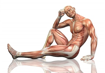 3D render van een zittende mannelijke figuur met gedetailleerde spier kaart