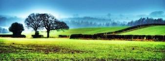 Achtergrond, noord, natuur mist boom gebied yorkshire