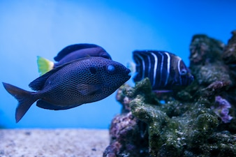 Aquarium onderwater panorama koraal vis