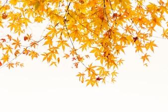 Art kleurrijke herfst Scenics rural