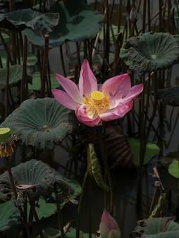 Bloem met roze bloemblaadjes in het water
