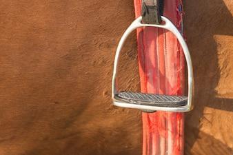 Close-up hengst voet boerenerf in de buurt