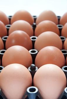 Close-up van eieren in zwarte plastic container