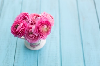 Close-up van schattige roze bloemen met blauwe achtergrond
