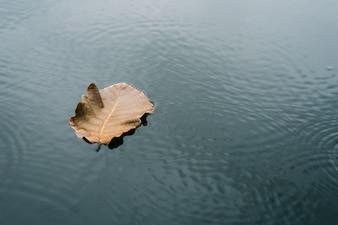 De bladeren drijven op het water