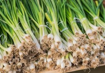 Een nette rij lente-uien gebundeld met rood elastiek klaar voor verkoop op de markt. Lente-ui. Rijp voorjaar groen Ui. Groene uienbladeren