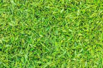 Groen werk china persoon landschap