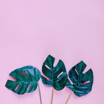 Groene palmbladeren op roze achtergrond met kopie ruimte, lente en zomer concept