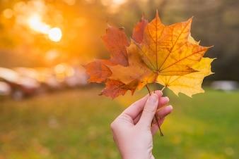 Hand met gele esdoornblad op de herfst gele zonnige achtergrond