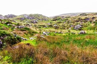 Helder ierland groen eiland reizen gras