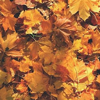 Herfstbladeren. Natuurlijke seizoensgebonden gekleurde achtergrond