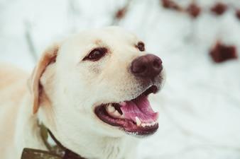 Hond met open mond
