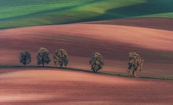 Kastanjestraat in Zuid-Moravië