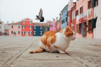 Kat op de straat