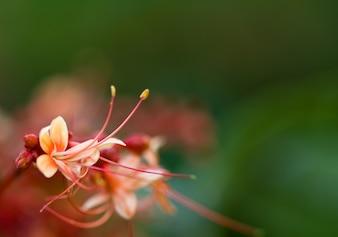 Kleine roze bloem