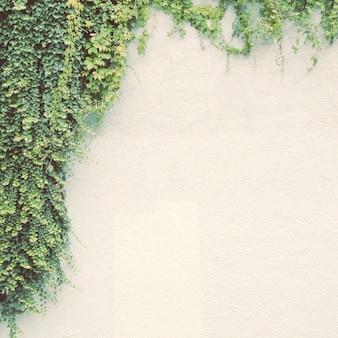 Klimopplant op witte muur met retro filter effect